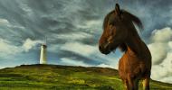 Тренировъчна скала на коня – Част 4 – Активиране на задните крака