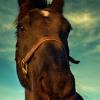 Тренировъчна скала на коня – Част 5 – Импулс