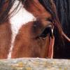 Как безопасно да завържем коня?