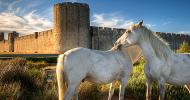 За белия кон и съдбата