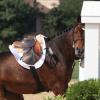 Проблеми при прескачането на препятствия при езда