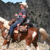 """""""Тевис Къп"""" – състезание за издръжливост на коне"""