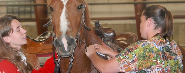 Ваксини при конете
