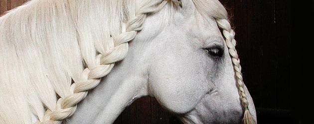 Болонска порода коне (Boulonnais  horse)