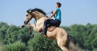 Как трябва да се работи с плашлив и нервен кон?