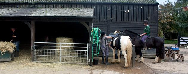 Грижа за конете в конюшнята