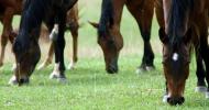 Храносмилателна система на коня