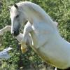 Двигателна активност при конете