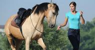 Да си осигурим безопасност при работа с коне