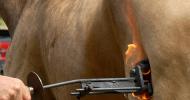 Идентификация на спортни коне