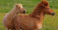 Особености в характера на коня