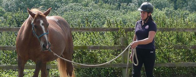 Основи на кордирането на коня