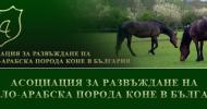 Асоциация за развъждане на Англо-арабска порода коне
