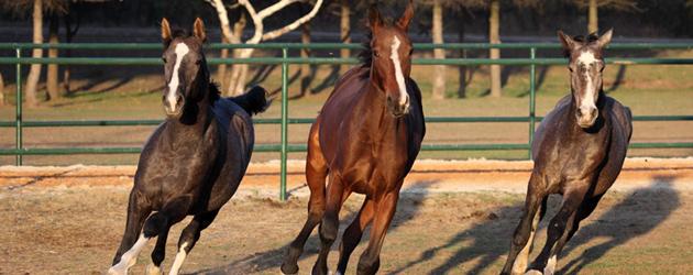 """Клуб по конен спорт и коневъдство """"RuseHorse"""""""
