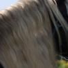 Ген за Дивата окраска при конете и сребристата шарка
