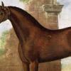 Най-известния кон. Историята на жребецът Шам
