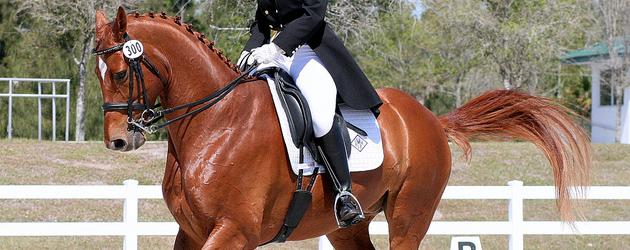 Истинска събраност на коня – Част 3. Тренираното равновесие – обязденият кон