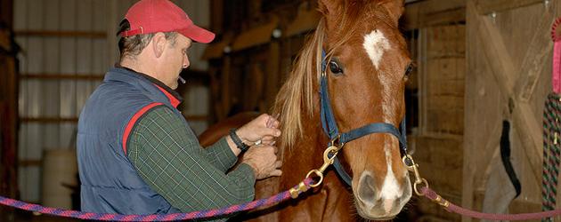 Остеопатията при конете – алтернативна медицина