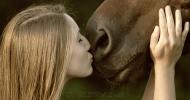 Принципи за обучение и позитивно отношение към коня – част 2