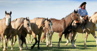Какво е естествено за конете и естествено управление на коня