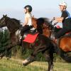 Как да подготвим коня за ендюранс