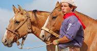 Аржентински креолски кон (Criollo)