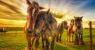 Застраховка на коне за разплод, състезателни коне и за любителска езда