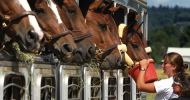 Хранене на конете с груби фуражи