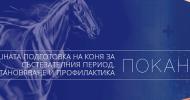 """Презентация на тема """"Успешната подготовка на коня за състезателния период"""""""