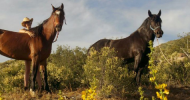 Тренинг за личностно и професионално развитие чрез метода семейни констелации с коне