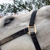 жестове-коне