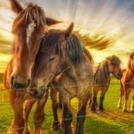 застраховка на коне