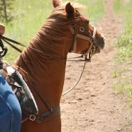 пеомяна на коне мустанги