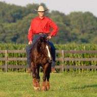 как да разговариаме с конете