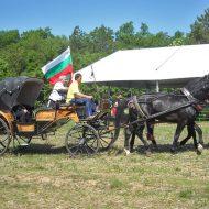 Дунавски кон във ферма Дилчеви